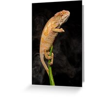 Chameleon in the mist Greeting Card