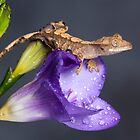 Crested gecko baby on purple freesia by AngiNelson