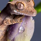 Baby Crested gecko portrait by AngiNelson