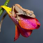 Baby Crested gecko on Freesia 2 by Angi Wallace