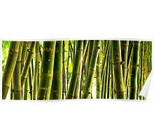 Bamboo Graffiti Poster