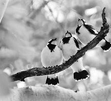Three Little Birds by Dieter Tracey