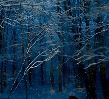 Silent Night by Megan Noble