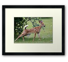 Spotted Fawn Framed Print