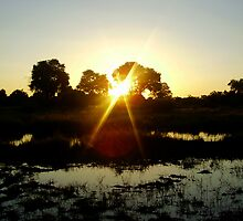 Okavango sunset by kimmylowe1986