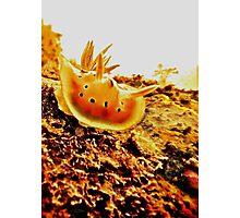 THE LITTLE RED SAMURAI Photographic Print