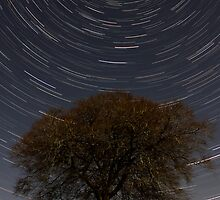 Star Trail by Royston Palmer