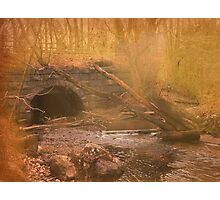 Restful Place Photographic Print