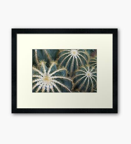 Sharp Beauty - Elegantly Ordered Cactus Needles Framed Print