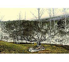 Stones & Trees Photographic Print