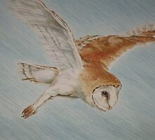 Arrow The Barn Owl by leunig
