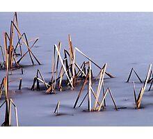 Sticks in Frozen Pond Photographic Print