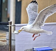 Black- Back Gull  Stealing China From A Nearby Cafe by lynn carter