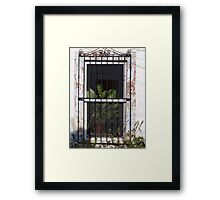 Window With Plant - Ventana Con Planta Framed Print