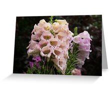 Exquisite, Elegant English Foxgloves Greeting Card