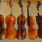Row of violins by Sue McGlothlin