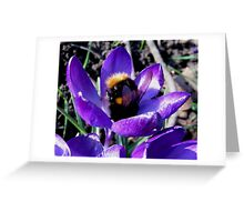 BUMBLE BEE IN CROCUS Greeting Card