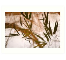WaterReflections.... 30 Art Print