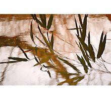 WaterReflections.... 30 Photographic Print