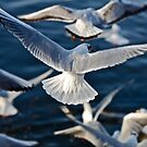 Wings of spring 2012 . by Doktor Faust . Views: 260 Thx! by © Andrzej Goszcz,M.D. Ph.D