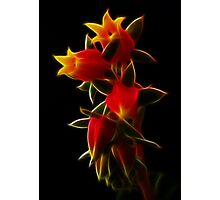Dream Of Fractal Red Rebellion Photographic Print