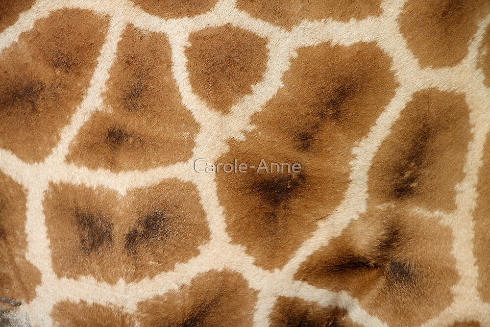 Rothschild's Giraffe Hide by Carole-Anne