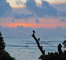 Bird Watch at Sunrise by HanieBCreations