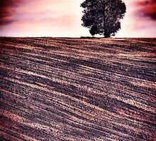 Ploughed & Ready by Natalie Durell