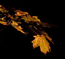 Fall leaves. by michelsoucy