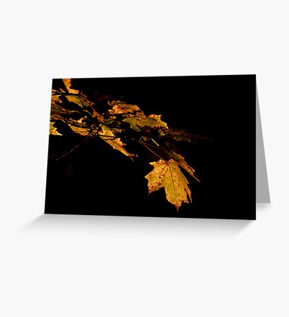 Fall leaves. Greeting Card