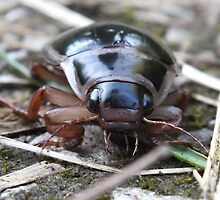 Beetle About by Mark Baldwin