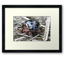 Beetle About Framed Print