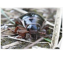 Beetle About Poster