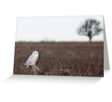 Snowy Owl in a field Greeting Card