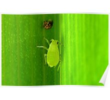 Aphid Poster