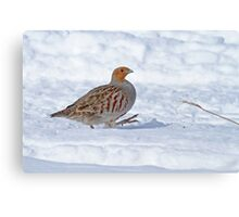 Best Foot Forward - Gray Partridge Canvas Print