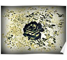 Black and Gold Rose - Photography Art Poster