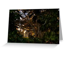 Winter Afternoon in Fitzroy Gardens, Melbourne, Australia Greeting Card