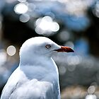 Gull Gazing by YingDude