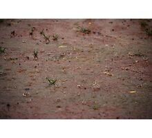 Splish, splash! Raindrops falling. Photographic Print