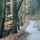 Winding Road Along French Creek by Geno Rugh