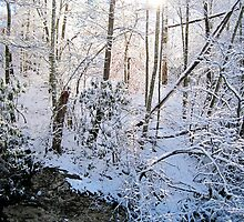 light through the winter woods by LoreLeft27