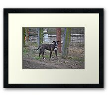 Andy's day of freedom! Framed Print