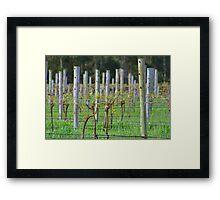 Vino Vines Framed Print