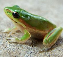 Original Frog Photo - cropped unedited by julieapearce