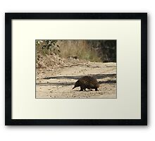 Crossing the road Framed Print