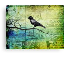 Portrait of a Raven Canvas Print