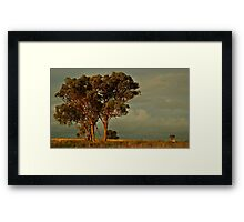 Trees at Dawn -  Yeoval, NSW Framed Print