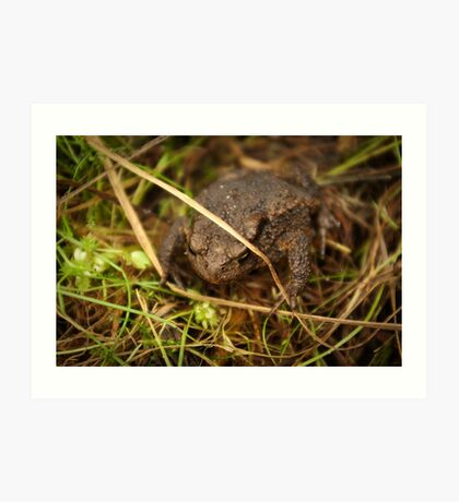 One of nature's beauties - Common Toad Art Print