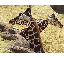 wild animals Photographic Print